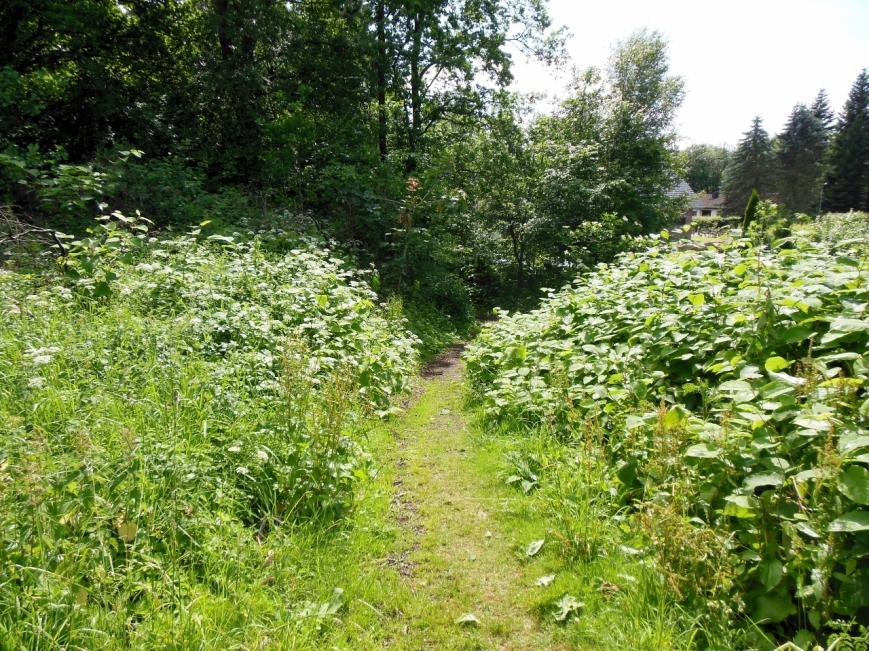 Der Weg nimmt hier sein Ende, eine etwas besserer Ab- bzw. Aufgang als am Beimoorweg.