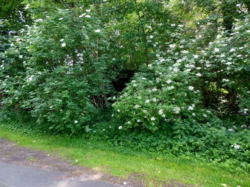 Hinter den Büschen ginge der Bahndamm noch ein Stück weiter, dieser ist jedoch nicht begehbar.