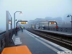 Baumwall im Nebel, 25.11.2014