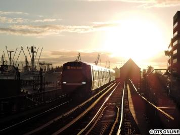"""Ein DT5 am Baumwall vor dem Sonnenuntergang in der """"goldenen Stunde"""""""