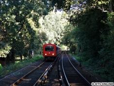 In seinem letzten Sommer befährt dieser DT2-Zug (752/763/780/771) gerade die Strecke zwischen Lattenkamp und Hudtwalckerstraß, gesäumt von den unzähligen Bäumen.