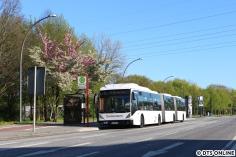 Ein Stück weiter am Nedderfeld: Ein weißer Doppelgelenkbus steht in der Sonne