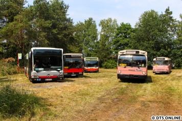 Der bekannte pinke Schnellbus 6416 machte kleine Rundfahrten und fuhr von und zum Bahnhof Schwanheide.
